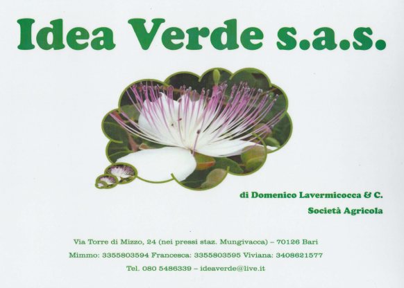 Espositore Idea Verde